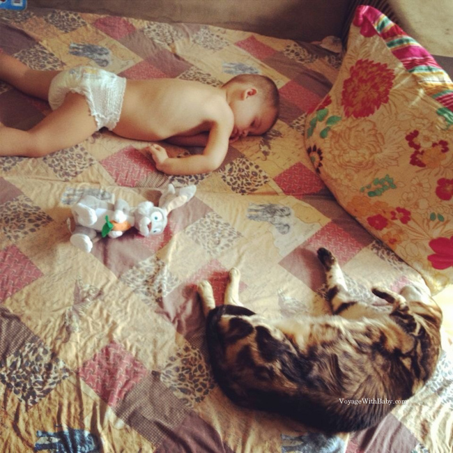Сладкий сор ребенка с котом