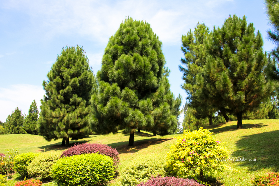 Деревья и кусты