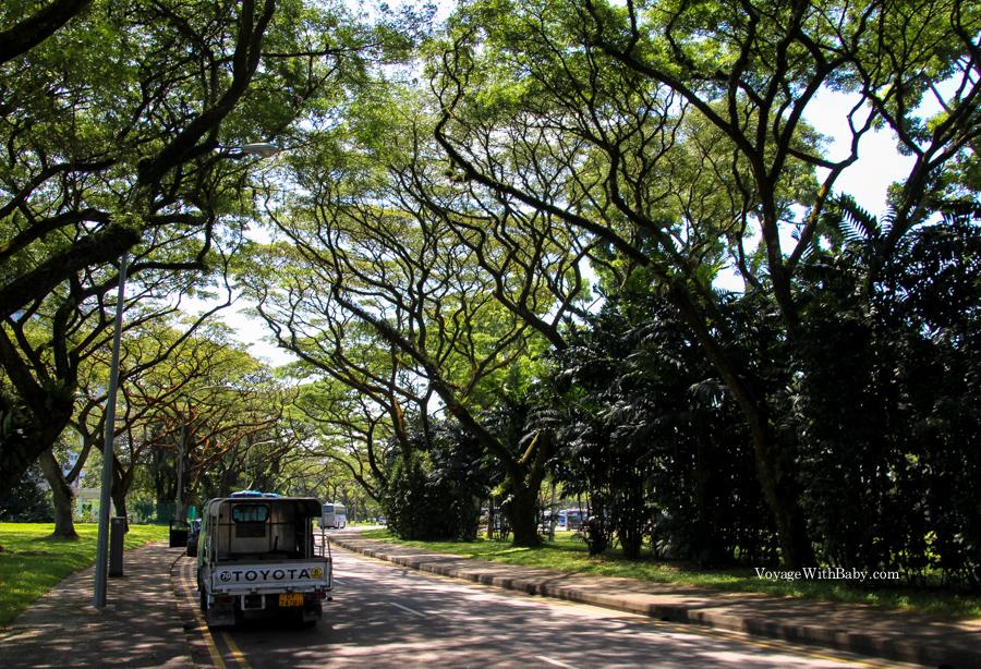 Красивый парк в Сингапуре