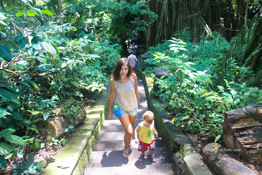 Прогулка по Лесу Обезьян на Бали