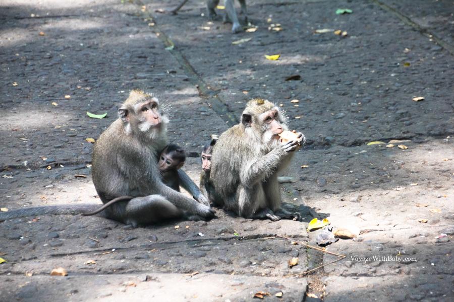 Лес обезьян у Убуде