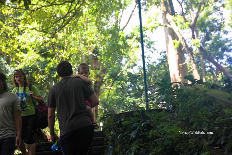 В Лесу Обезьян