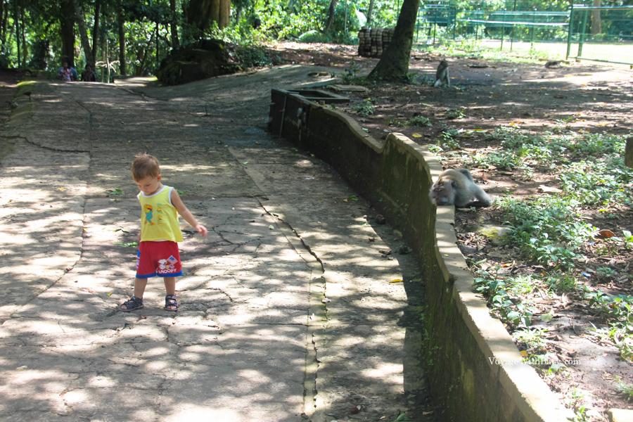 Лес Обезьян на Бали с ребенком