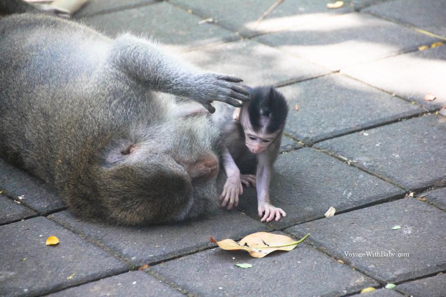 Детеныш обезьяны играет с листочком