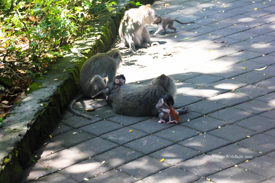 Семьи обезьян на Бали