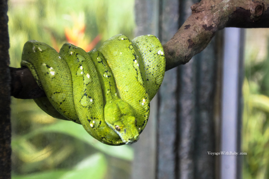 Змеи в Таиланде, на Бали и других странах Азии