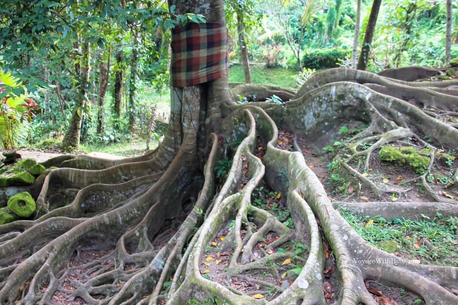 Священное дерево в Гоа Гаджа на Бали