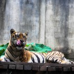 Зоопарк Bali Zoo