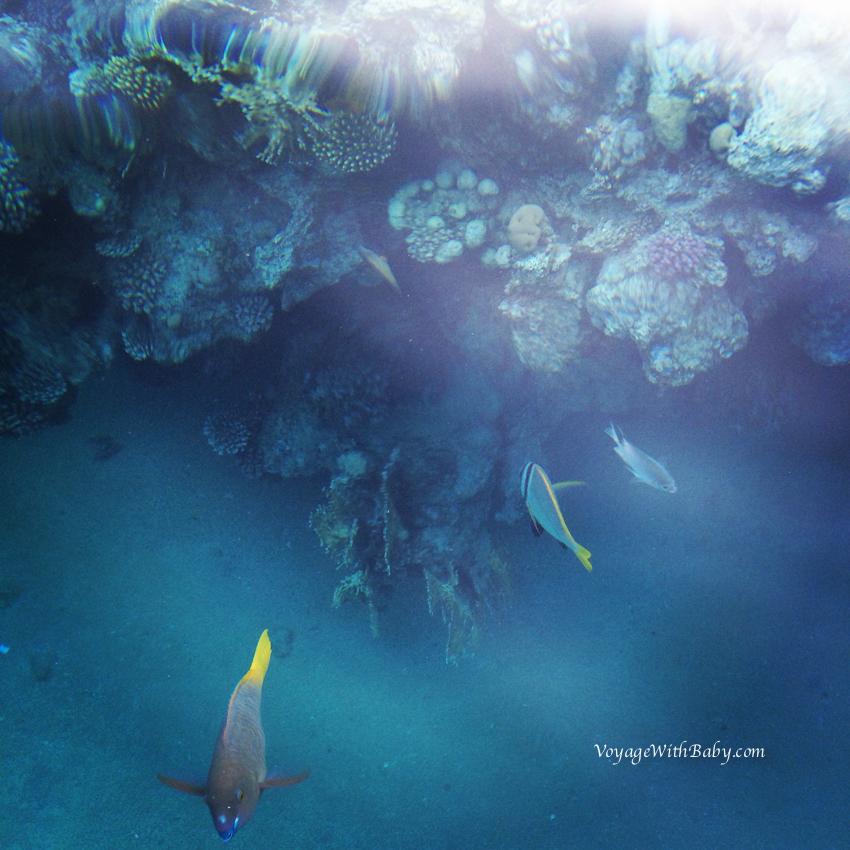 Рыбки в Красном Море