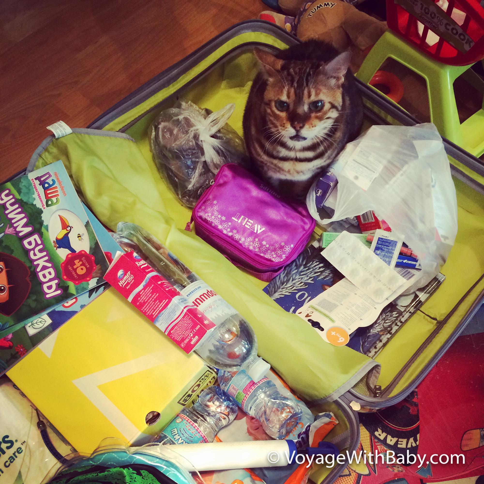 Собираем чемоданы. Главное не забыть кота ))))
