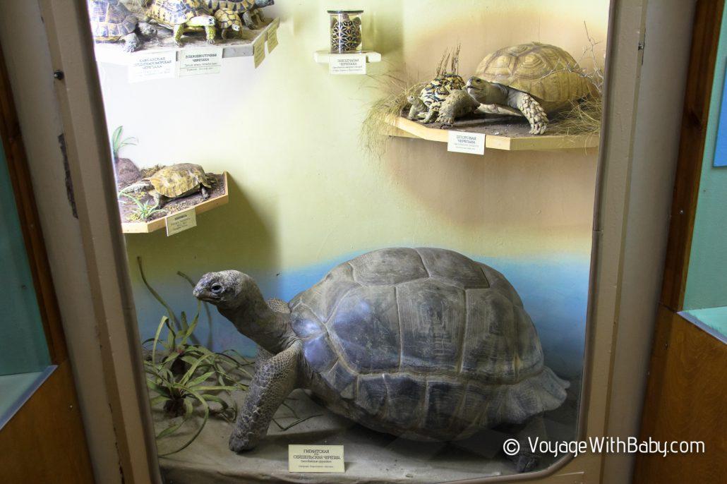 Музей природы в Харькове - черепаха