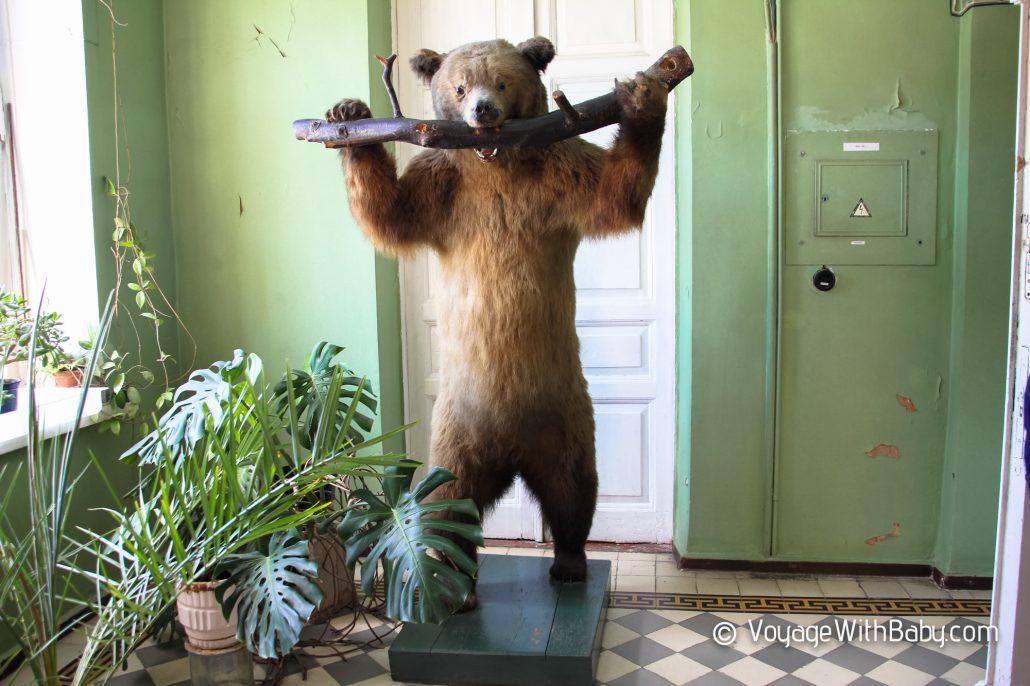 Музей природы в Харькове - медведь
