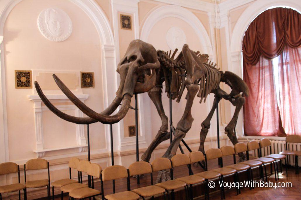 Музей природы в Харькове - мамонт