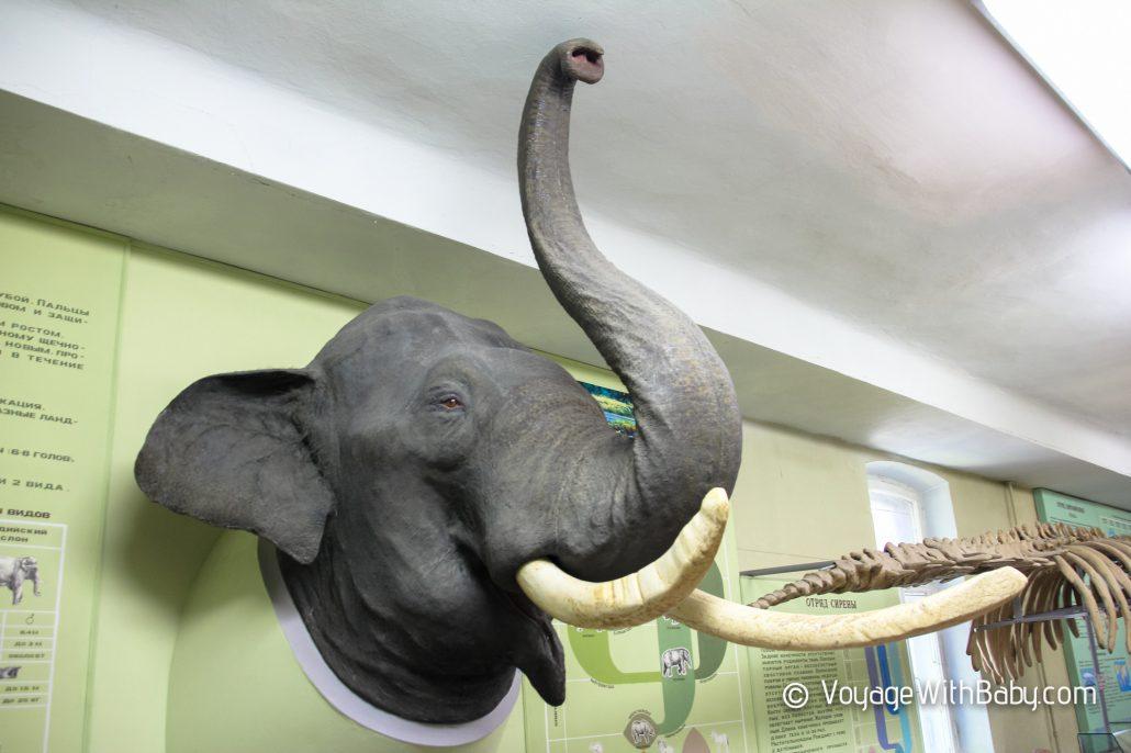 Музей природы в Харькове