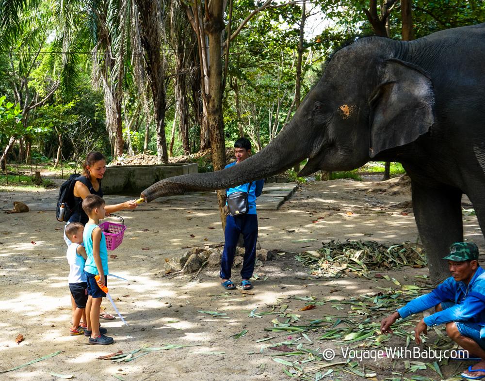 Слоновья Деревня в Хуа Хине (Hua Hin Elephant Village)